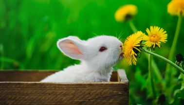 Baby Bunny with Dandelion Flower