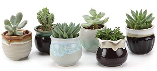 Succulents-in-cute-containers
