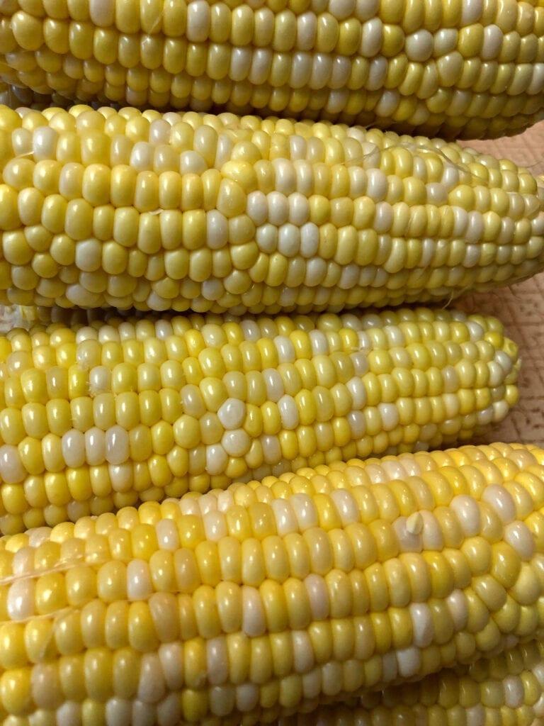 Fresh Corn on the Cob Cleaned